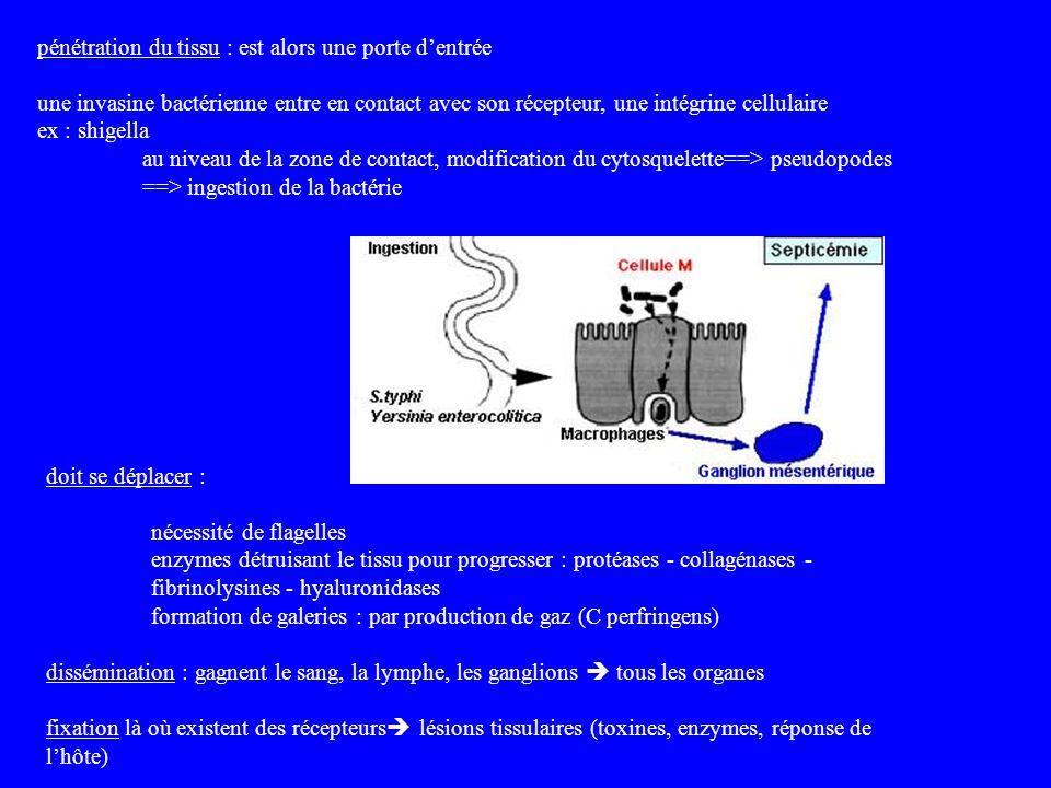 doit se déplacer : nécessité de flagelles enzymes détruisant le tissu pour progresser : protéases - collagénases - fibrinolysines - hyaluronidases for