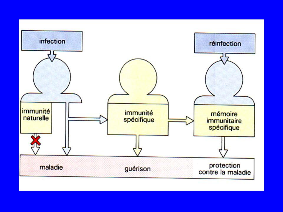 Barrière cutanéo-muqueuse effet barrière des flores : empêche la multiplication physique : est quasi imperméable chimique : destruction des germes (acidité, lysozyme, bile...) Elimination des germes évacuation du bol alimentaire (selles) flux des urines tapis muco ciliaire de larbre respiratoire hygiène (lavage régulier) desquamation Non spécifiques - Innés