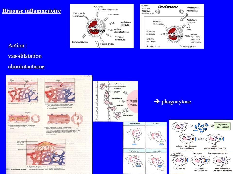 Action : vasodilatation chimiotactisme phagocytose Réponse inflammatoire