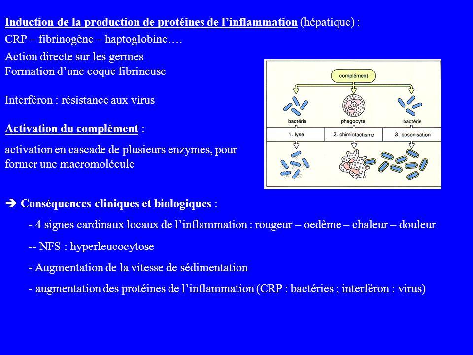 Induction de la production de protéines de linflammation (hépatique) : CRP – fibrinogène – haptoglobine…. Action directe sur les germes Formation dune