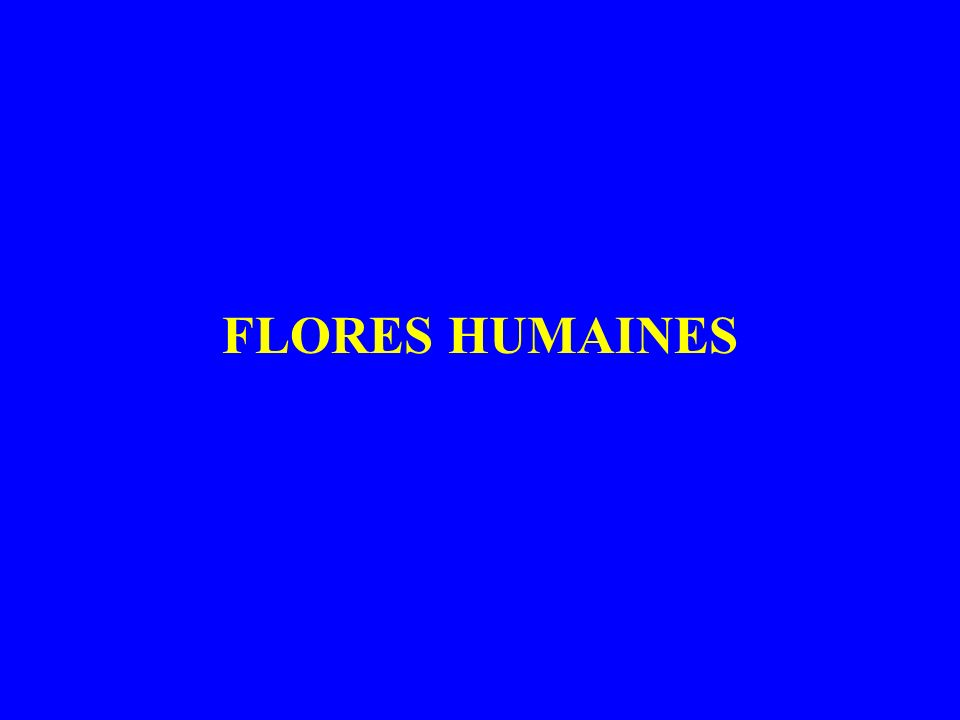 FLORES HUMAINES
