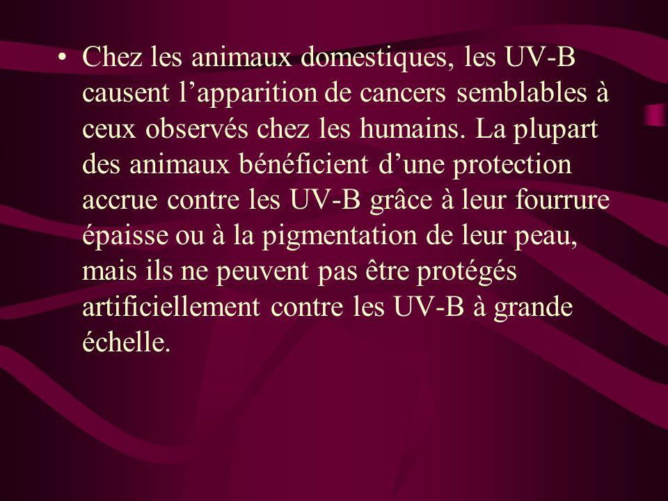 Chez les animaux domestiques, les UV-B causent lapparition de cancers semblables à ceux observés chez les humains. La plupart des animaux bénéficient