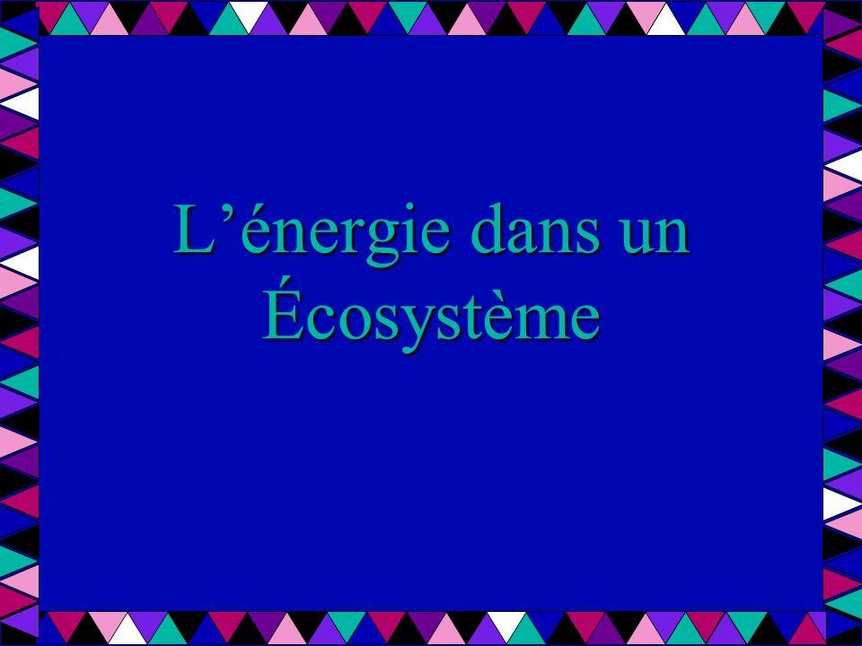 Lénergie dans un Écosystème