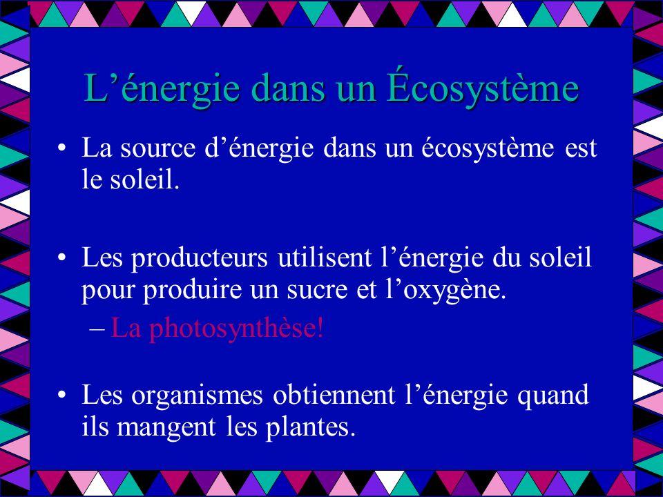 La source dénergie dans un écosystème est le soleil. Les producteurs utilisent lénergie du soleil pour produire un sucre et loxygène. –La photosynthès