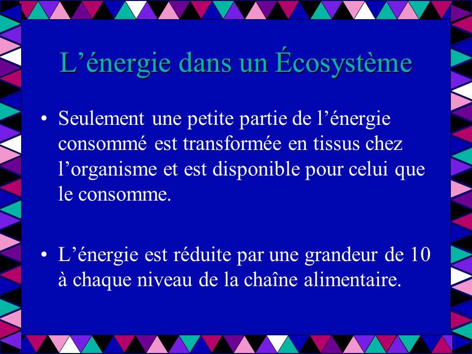 Lénergie dans un Écosystème Seulement une petite partie de lénergie consommé est transformée en tissus chez lorganisme et est disponible pour celui qu