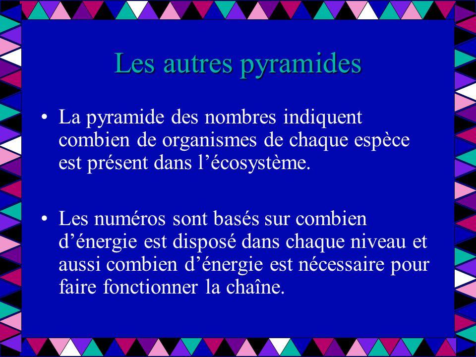 Les autres pyramides La pyramide des nombres indiquent combien de organismes de chaque espèce est présent dans lécosystème. Les numéros sont basés sur