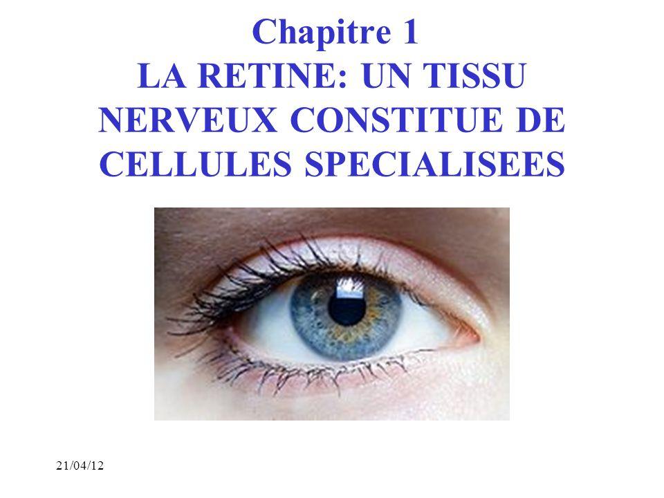 3 I- Lœil: un récepteur sensoriel.