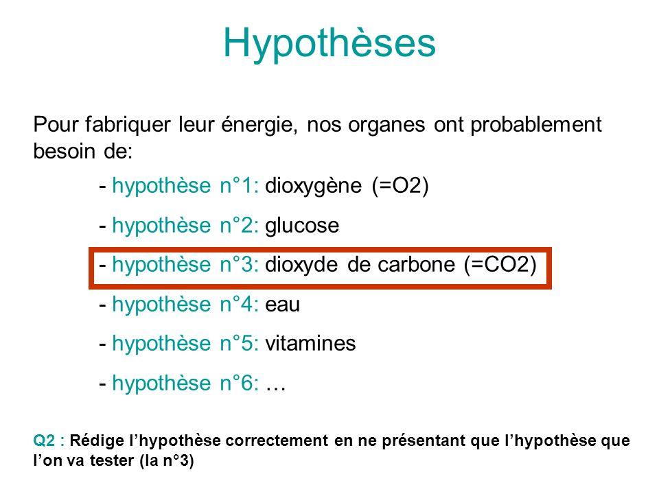 Hypothèses Pour fabriquer leur énergie, nos organes ont probablement besoin de: - hypothèse n°1: dioxygène (=O2) - hypothèse n°2: glucose - hypothèse