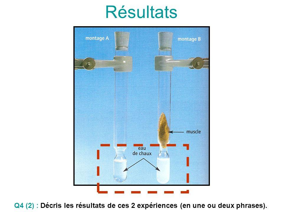 Résultats Q4 (2) : Décris les résultats de ces 2 expériences (en une ou deux phrases).