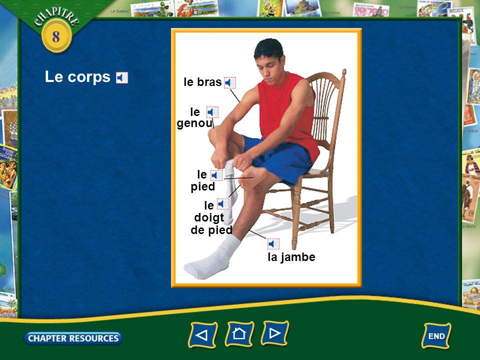 8 Le corps le bras le genou le pied le doigt de pied la jambe