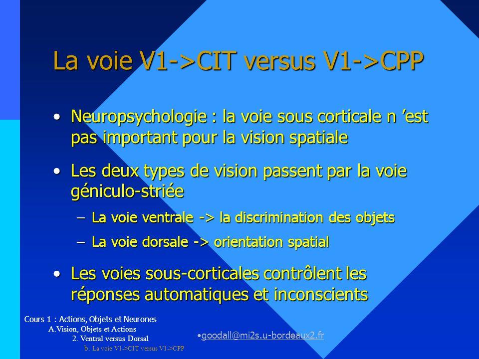 goodall@mi2s.u-bordeaux2.fr La voie V1->CIT versus V1->CPP Neuropsychologie : la voie sous corticale n est pas important pour la vision spatialeNeurop