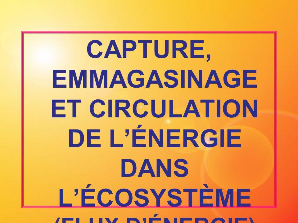 CAPTURE, EMMAGASINAGE ET CIRCULATION DE LÉNERGIE DANS LÉCOSYSTÈME (FLUX DÉNERGIE)