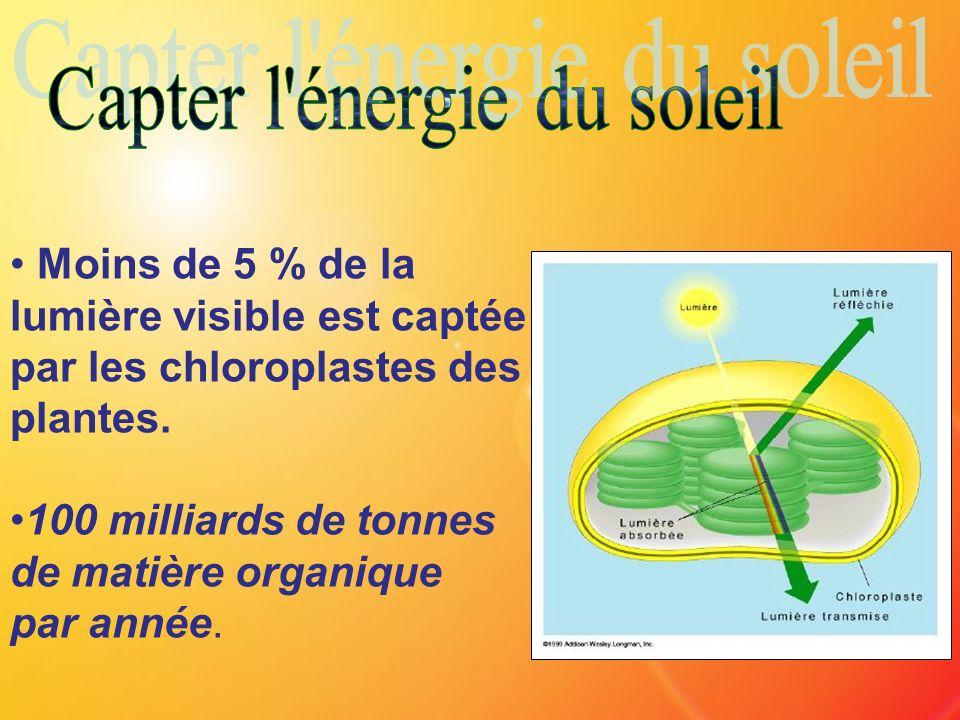 Moins de 5 % de la lumière visible est captée par les chloroplastes des plantes. 100 milliards de tonnes de matière organique par année.
