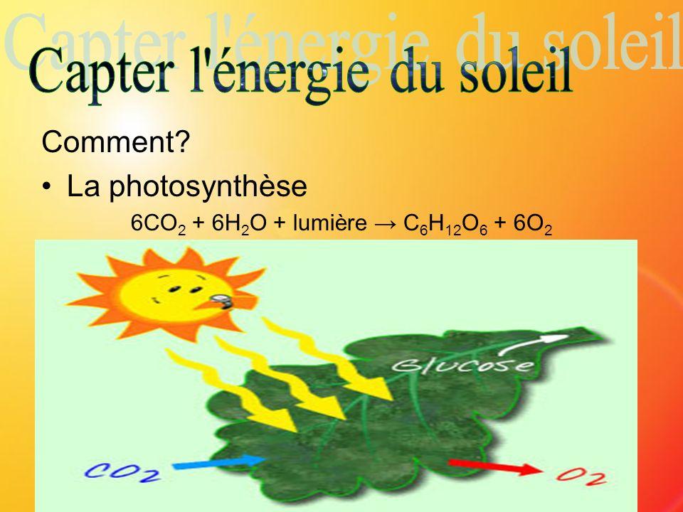 Comment? La photosynthèse 6CO 2 + 6H 2 O + lumière C 6 H 12 O 6 + 6O 2