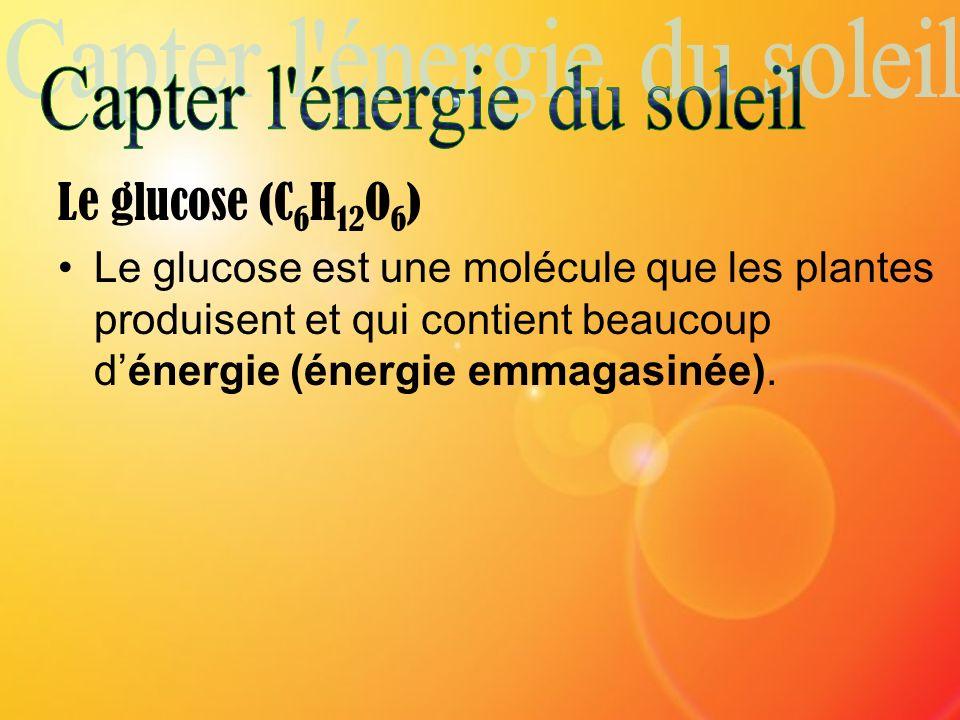 Le glucose (C 6 H 12 O 6 ) Le glucose est une molécule que les plantes produisent et qui contient beaucoup dénergie (énergie emmagasinée).