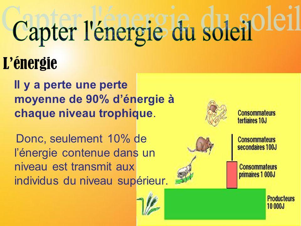Lénergie Il y a perte une perte moyenne de 90% dénergie à chaque niveau trophique. Donc, seulement 10% de lénergie contenue dans un niveau est transmi