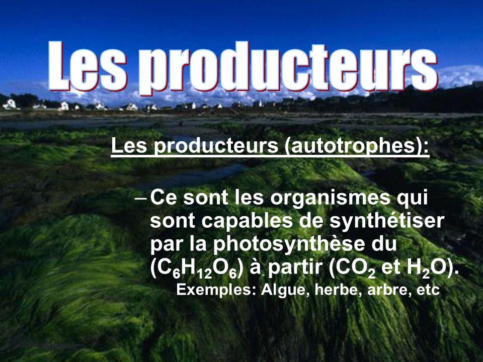 Les producteurs (autotrophes): –Ce sont les organismes qui sont capables de synthétiser par la photosynthèse du (C 6 H 12 O 6 ) à partir (CO 2 et H 2