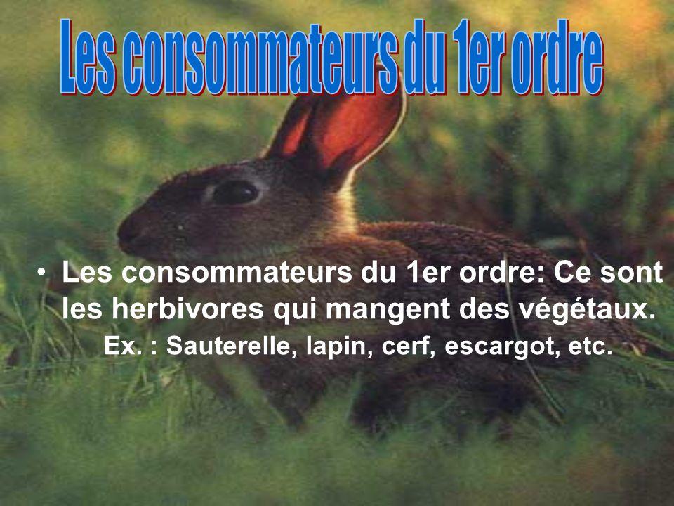 Les consommateurs du 1er ordre: Ce sont les herbivores qui mangent des végétaux. Ex. : Sauterelle, lapin, cerf, escargot, etc.