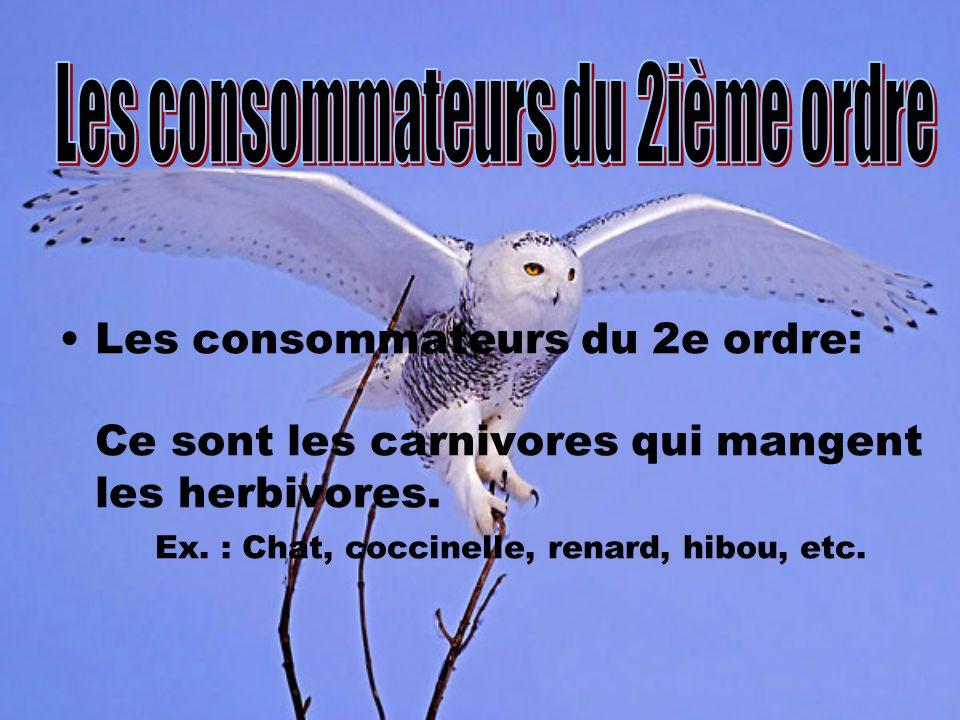 Les consommateurs du 2e ordre: Ce sont les carnivores qui mangent les herbivores. Ex. : Chat, coccinelle, renard, hibou, etc.