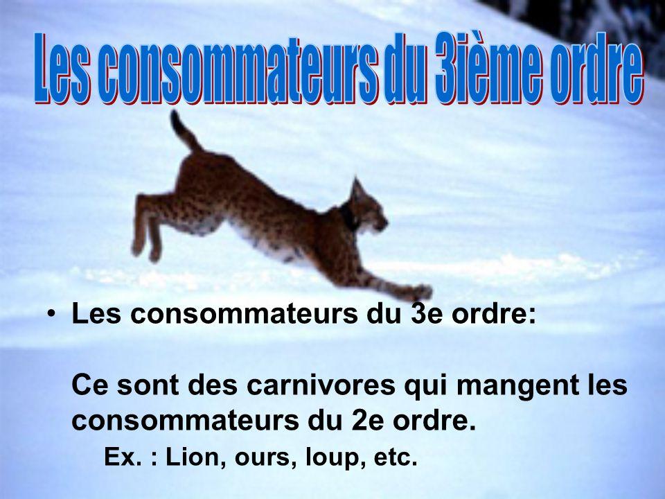 Les consommateurs du 3e ordre: Ce sont des carnivores qui mangent les consommateurs du 2e ordre. Ex. : Lion, ours, loup, etc.