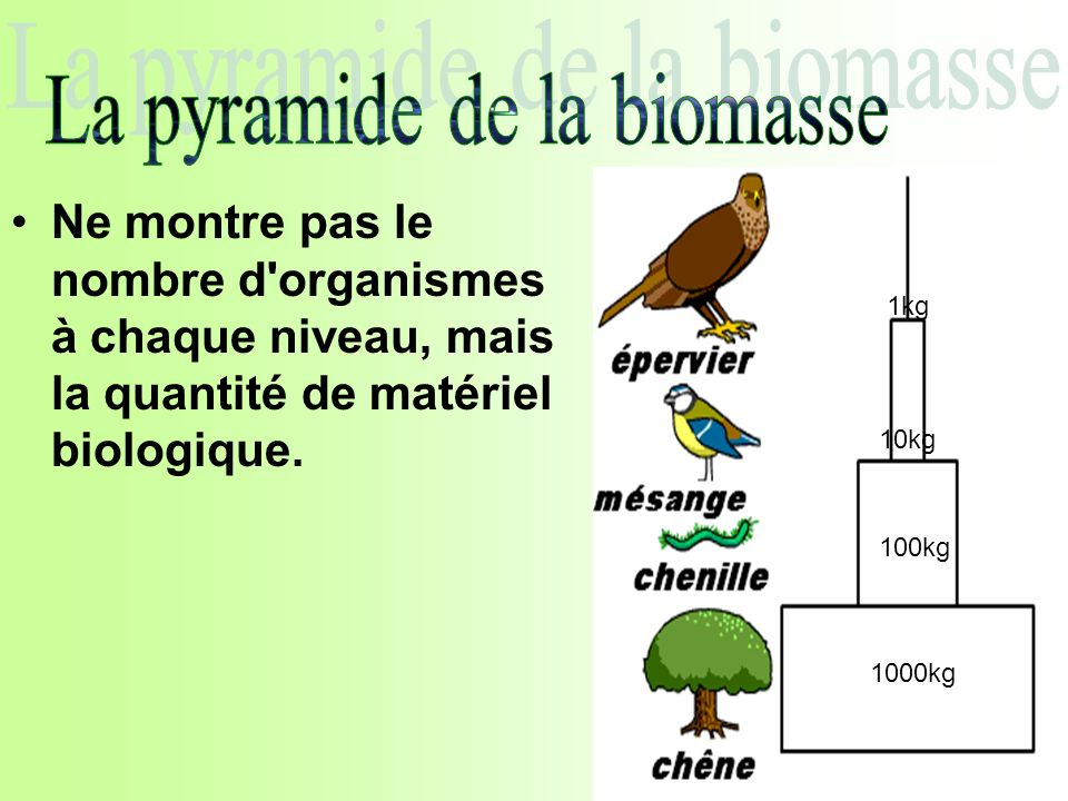 Ne montre pas le nombre d'organismes à chaque niveau, mais la quantité de matériel biologique. 1000kg 100kg 10kg 1kg