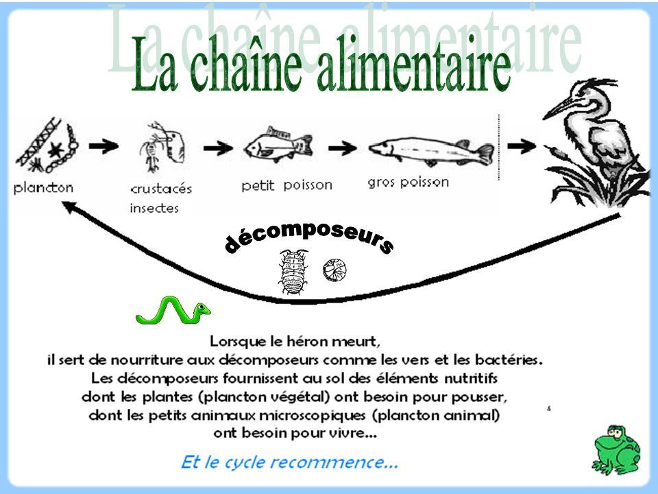 Principaux facteurs déterminant la capacité biotique: Les facteurs abiotiques représentent l ensemble des facteurs physico-chimiques d un écosystème.