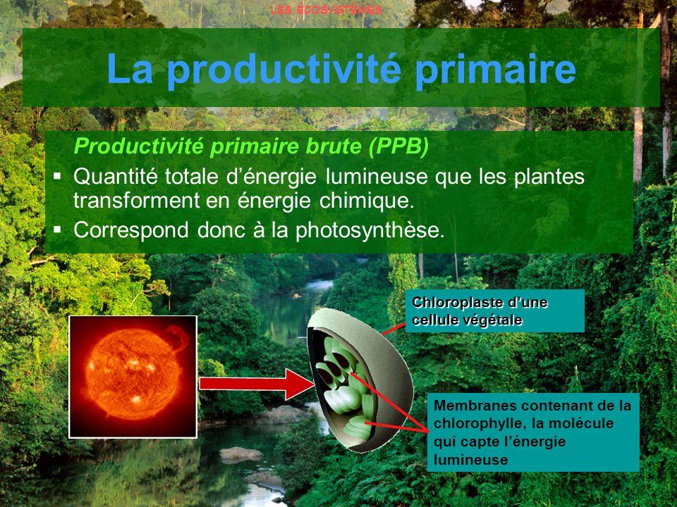 Productivité primaire brute (PPB) Quantité totale dénergie lumineuse que les plantes transforment en énergie chimique. Correspond donc à la photosynth