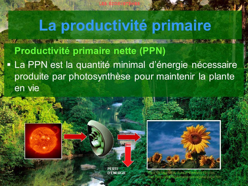 Fleur de tournesol. Auteur: Bertrand Nicolas. http://www.inra.fr/phototheque/vegetal/page.htm PERTE DÉNERGIE Productivité primaire nette (PPN) La PPN