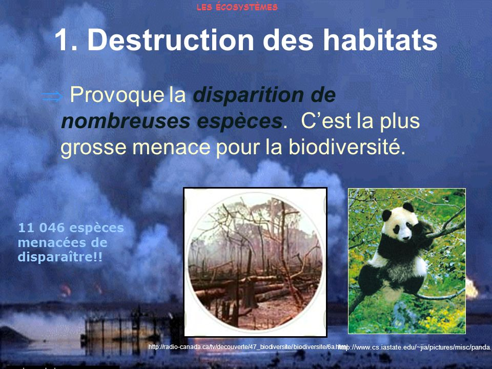 1. Destruction des habitats Provoque la disparition de nombreuses espèces. Cest la plus grosse menace pour la biodiversité. 11 046 espèces menacées de