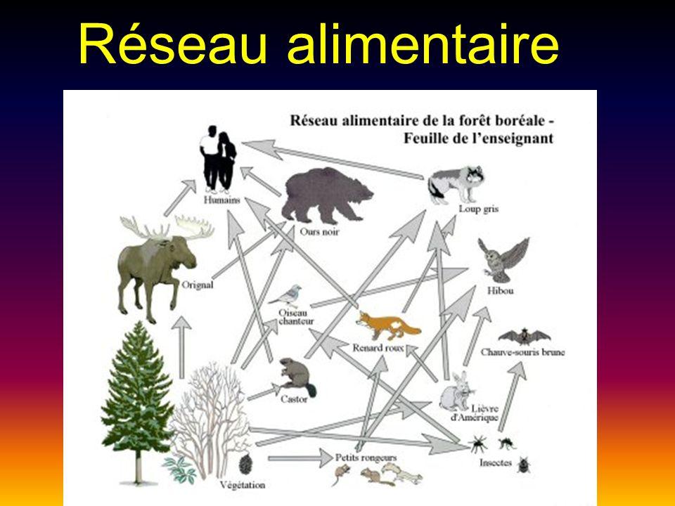 Herbivores (Lignes beiges) Carnivores primaires (Lignes bleues) Carnivores secondaires (Lignes mauves) Réseau alimentaire