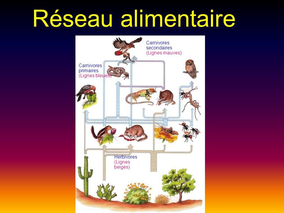 Les consommateurs du 1er ordre: Ce sont les herbivores qui mangent des végétaux.