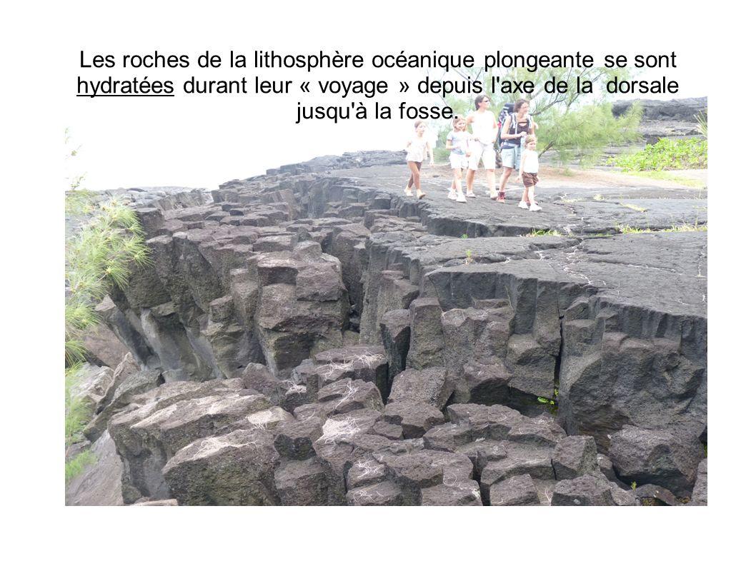 Les roches de la lithosphère océanique plongeante se sont hydratées durant leur « voyage » depuis l'axe de la dorsale jusqu'à la fosse.