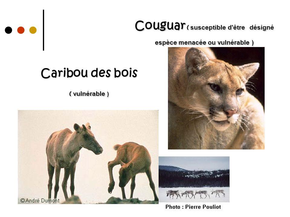 Caribou des bois ( vulnérable ) Couguar ( susceptible d'être désigné espèce menacée ou vulnérable )