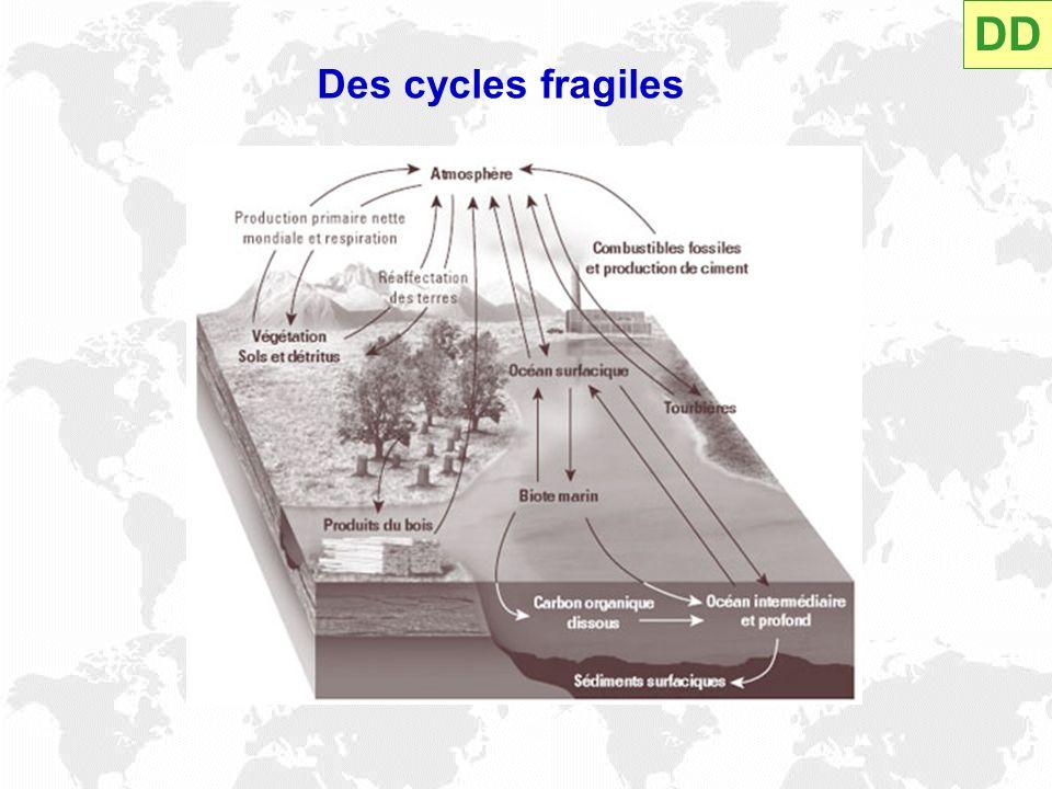 Des cycles fragiles DD