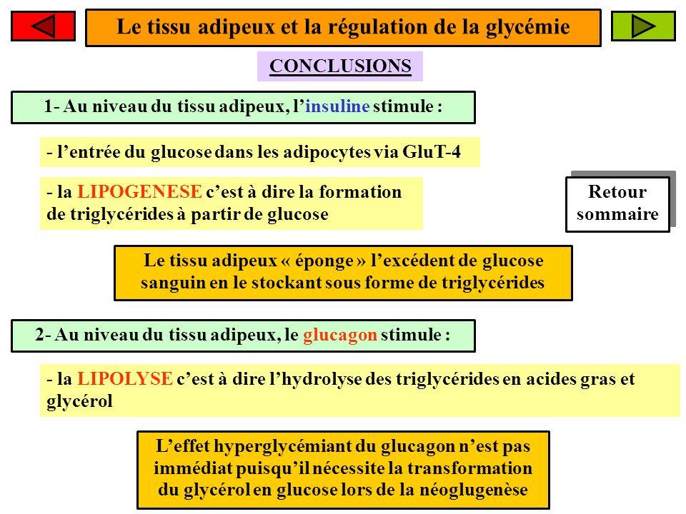 1- Au niveau du tissu adipeux, linsuline stimule : CONCLUSIONS Le tissu adipeux « éponge » lexcédent de glucose sanguin en le stockant sous forme de t