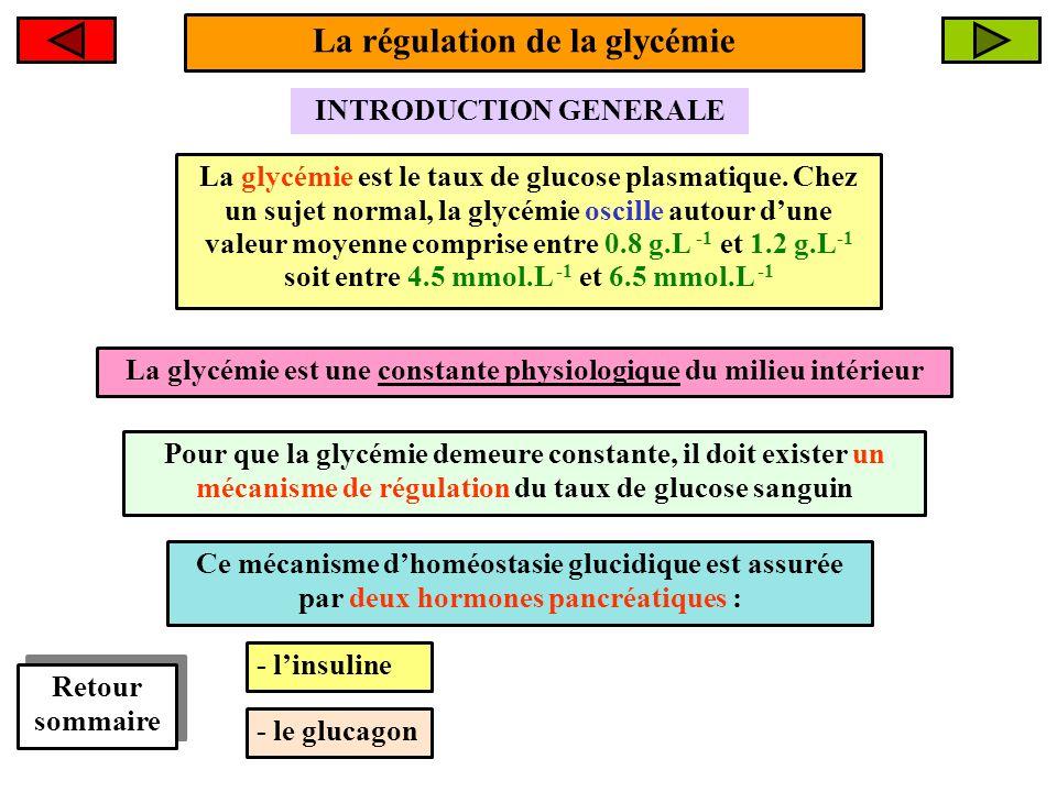 Le foie : un organe de libération de glucose 2- Si hypoglycémie FOIE La glycémie redevient normale cest à dire autour de 5 mmol/L 2- Glycogénolyse Glucose Glycogène Glycémie < 5 mmol/L Le foie est le seul organe capable de libérer du glucose lors dune hypoglycémie La libération du glucose hépatique permet de maintenir stable la glycémie entre les repas Glycémie = 5 mmol/L Glucagon + Le glucagon est une hormone hyperglycémiante stimulant la glycogénolyse hépatique