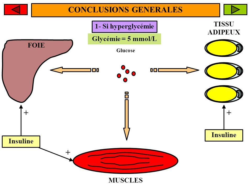 FOIE MUSCLES TISSU ADIPEUX CONCLUSIONS GENERALES Glycémie > 5 mmol/L Glycémie = 5 mmol/L 1- Si hyperglycémie Glucose Insuline + + +