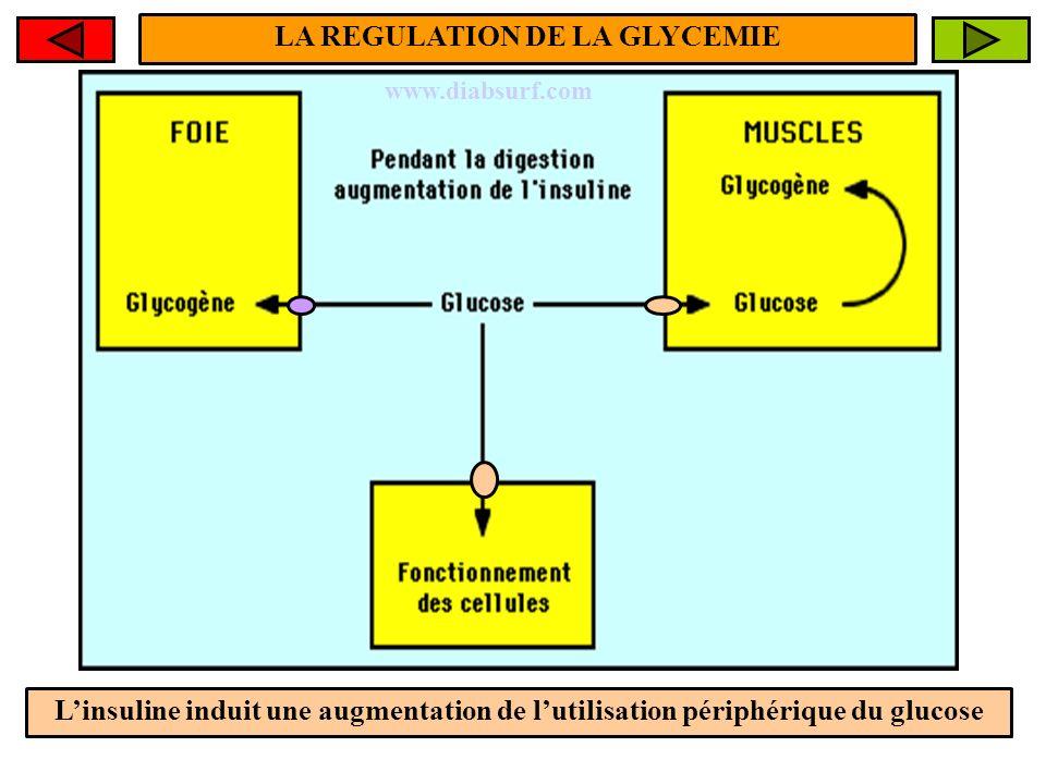 LA REGULATION DE LA GLYCEMIE Linsuline induit une augmentation de lutilisation périphérique du glucose www.diabsurf.com