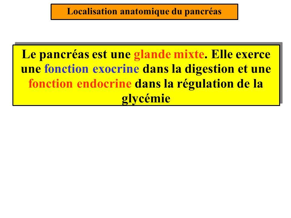 Les actions biologiques de linsuline (3/4) Insuline + ATP 3- Linsuline stimule la GLYCOLYSE hépatique et musculaire cest à dire la dégradation partielle du glucose en ATP