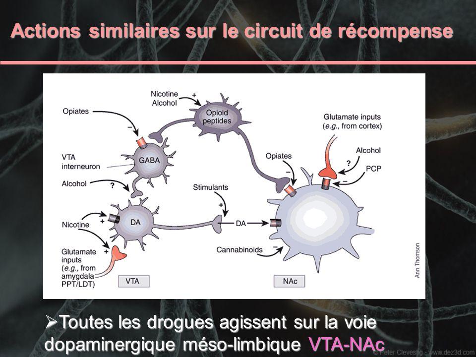 Actions similaires sur le circuit de récompense Actions similaires sur le circuit de récompense Toutes les drogues agissent sur la voie dopaminergique