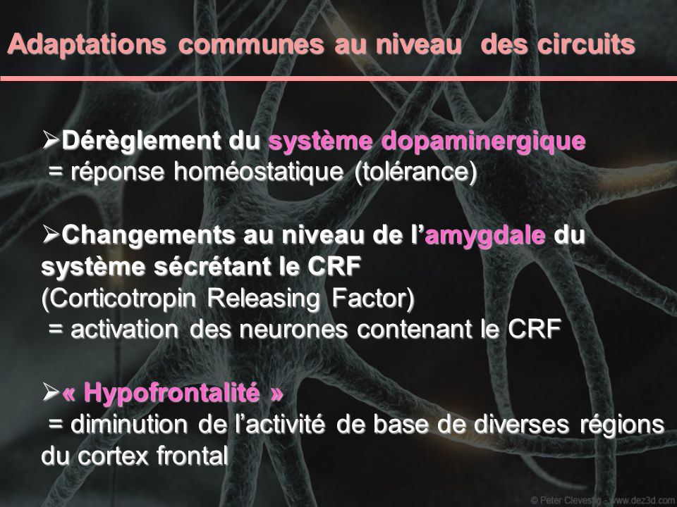 Adaptations cellulaires et moléculaires similaires Dans la VTA : Potentialisation à long terme LTP dans les neurones de la VTA Potentialisation à long terme LTP dans les neurones de la VTA Augmentation de la TH dans la VTA Augmentation de la TH dans la VTA Induction du facteur de transcription CREB Induction du facteur de transcription CREB