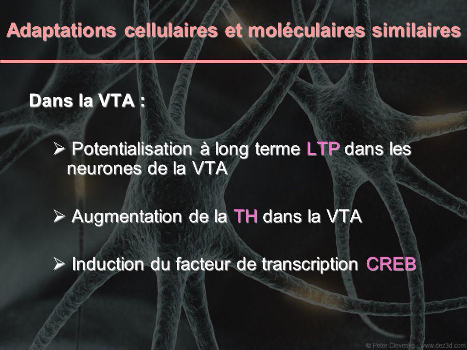 Adaptations cellulaires et moléculaires similaires Dans la VTA : Potentialisation à long terme LTP dans les neurones de la VTA Potentialisation à long
