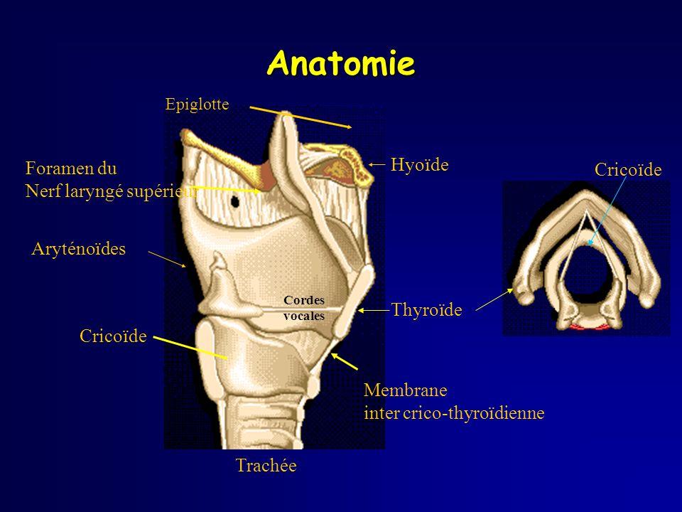 Anatomie Trachée Hyoïde Epiglotte Cordes vocales Aryténoïdes Cricoïde Thyroïde Membrane inter crico-thyroïdienne Foramen du Nerf laryngé supérieur Cri