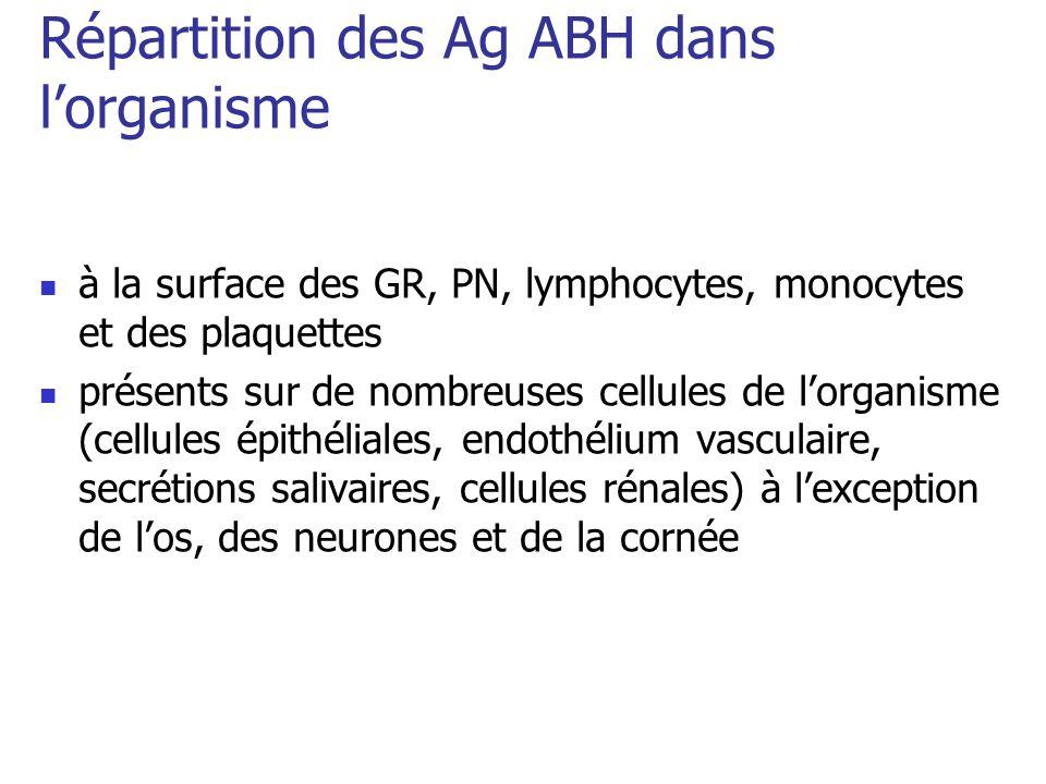 Répartition des Ag ABH dans lorganisme à la surface des GR, PN, lymphocytes, monocytes et des plaquettes présents sur de nombreuses cellules de lorgan