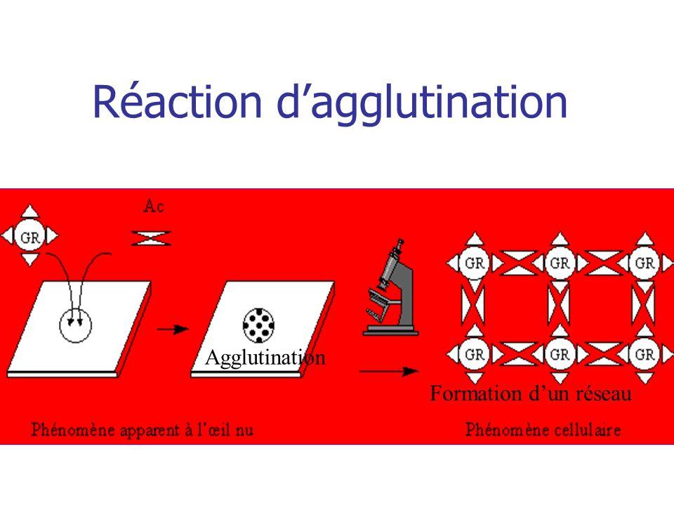 Réaction dagglutination Formation dun réseau Agglutination