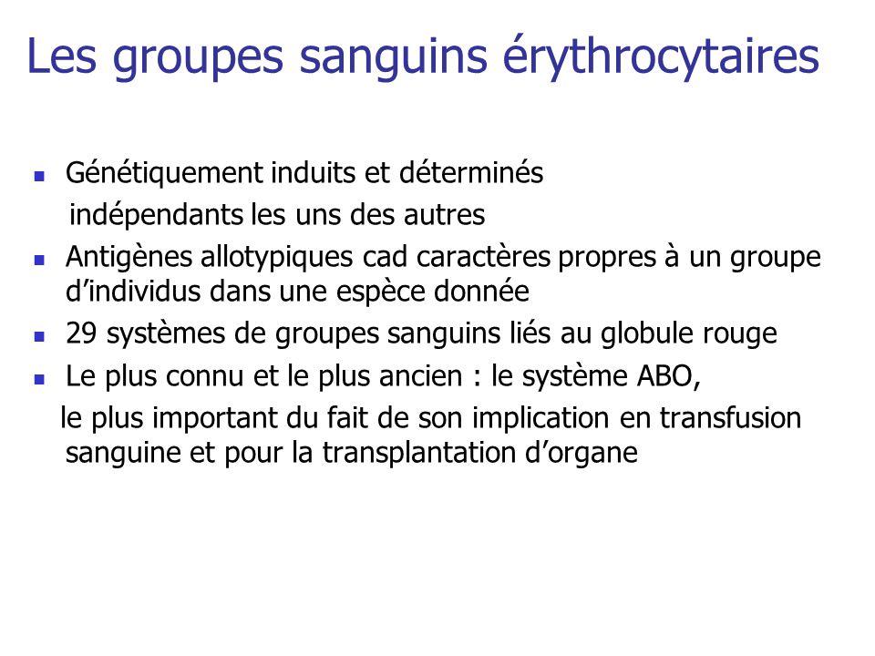 Les groupes sanguins érythrocytaires Génétiquement induits et déterminés indépendants les uns des autres Antigènes allotypiques cad caractères propres