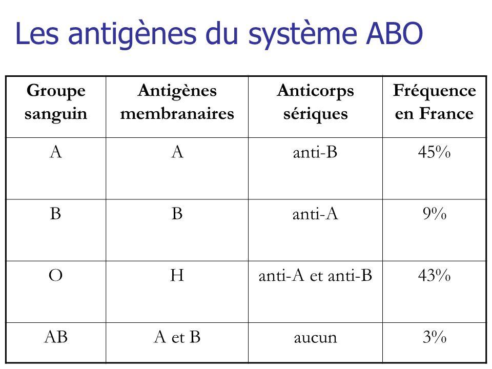 Répartition des Ag ABH dans lorganisme à la surface des GR, PN, lymphocytes, monocytes et des plaquettes présents sur de nombreuses cellules de lorganisme (cellules épithéliales, endothélium vasculaire, secrétions salivaires, cellules rénales) à lexception de los, des neurones et de la cornée