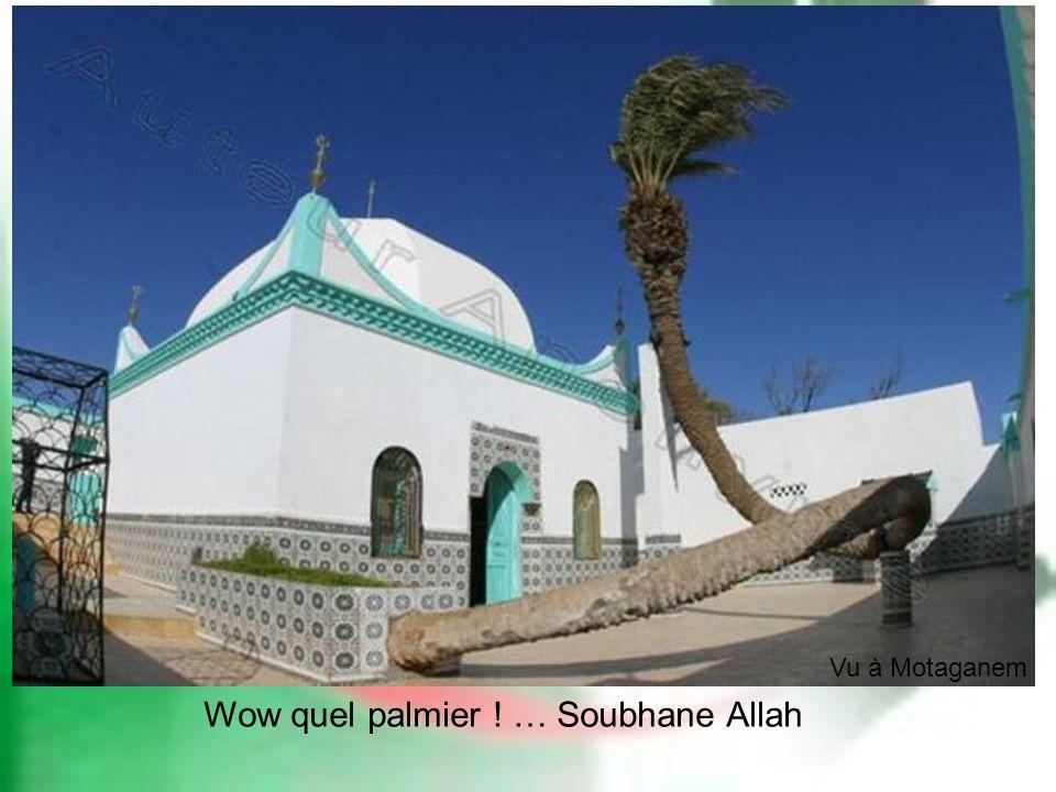 Wow quel palmier ! … Soubhane Allah Vu à Motaganem