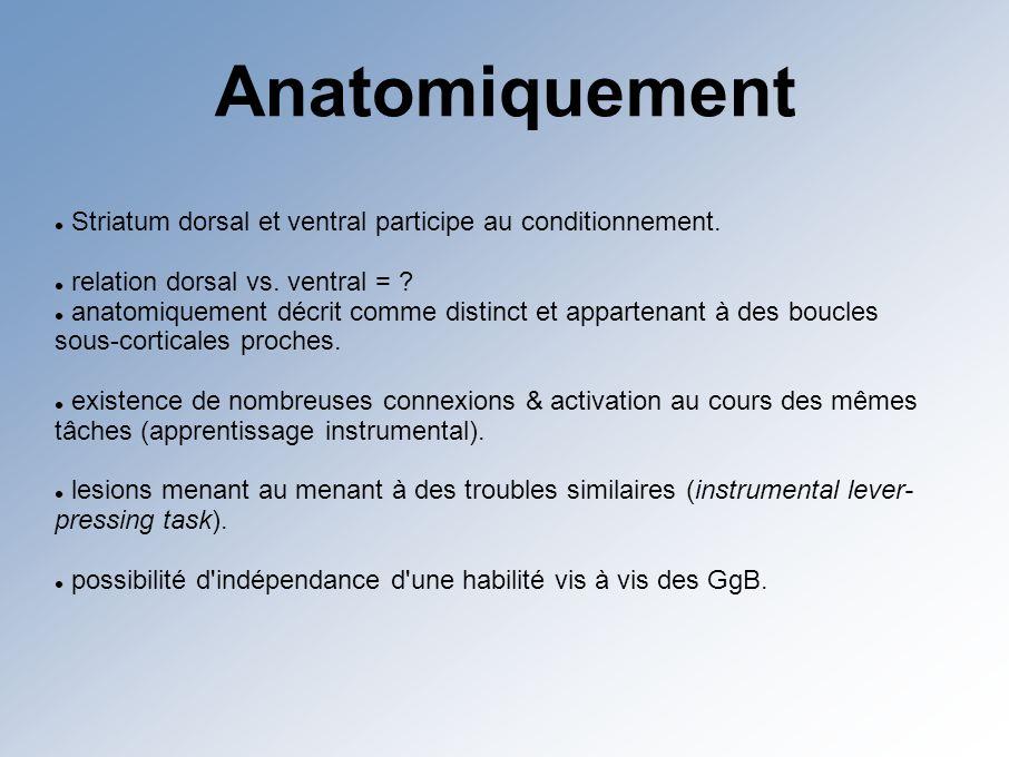 Anatomiquement Striatum dorsal et ventral participe au conditionnement.
