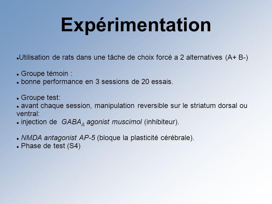 Expérimentation Utilisation de rats dans une tâche de choix forcé a 2 alternatives (A+ B-) Groupe témoin : bonne performance en 3 sessions de 20 essais.